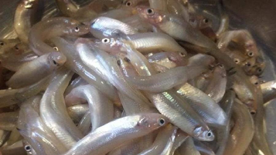Recette: Les moundja moto de Douala (les petits poissons)